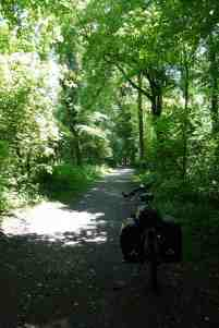 Auenwälder am Altrhein